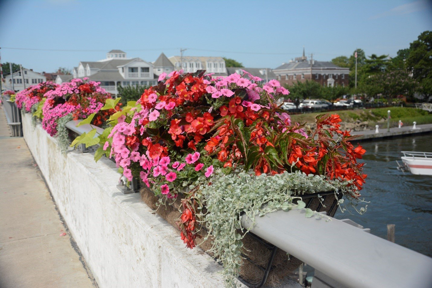 Lewes Community Profile In Bloom How To Build Plant Watering Watcher Circuit Schematic Planters On Drawbridge Over Canal